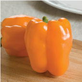 Gourmet Orange Sweet Peppers SP91-20