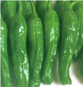 Green Twist Sweet Peppers SP308-10