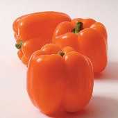 Horizon Sweet Peppers SP245-20