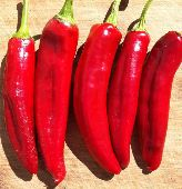 Hungarian Spice Paprika Sweet Peppers SP222-20_Base