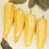 Hungarian Yellow Wax Hot Sweet Pepper SP287-20_Base