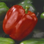 King Arthur Sweet Peppers SP334-10