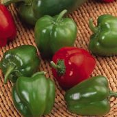 Lincoln Bell Sweet Peppers SP288-20