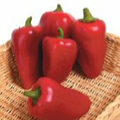 Lipstick Sweet Peppers SP128-20_Base