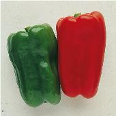 Long Red Bell Sweet Peppers SP252-20_Base