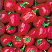 Miniature Sweet Bell Peppers (Red) SP198-20_Base