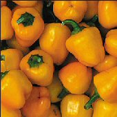 Miniature Sweet Bell Peppers (Yellow) SP199-20_Base