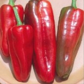 Marconi Sweet Peppers (Red Patio) SP235-20_Base