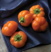 Orange You Sweet Hungarian Cheese Sweet Peppers SP353-20_Base