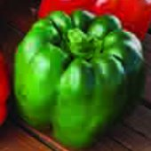 Ozark Giant Sweet Peppers SP336-10_Base
