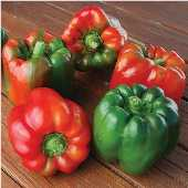 Ozark Giant Sweet Peppers SP336-20_Base