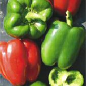 Pacific Bell Sweet Peppers (Type 1) SP297-20