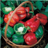 Park's Early Thickset Improved Sweet Peppers SP268-10
