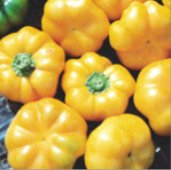 Pimento Yellow Cheese Sweet Peppers SP212-20_Base
