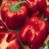 Quadrato d'Asti Sweet Peppers (Red) SP60-20