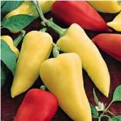 Romanian Sweet Peppers SP248-20_Base
