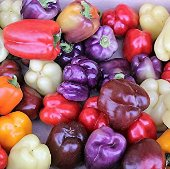 Roumanian Rainbow Sweet Peppers SP65-20_Base