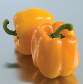 Sunrise Orange Sweet Peppers SP211-10_Base