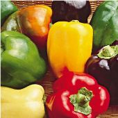 Sweet Bell Mix Sweet Peppers SP236-20_Base