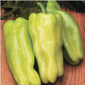Sweet Havana Sweet Peppers SP74-20_Base