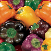 Sweet Rainbow Blend Sweet Peppers SP147-20_Base