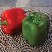 Touchdown Sweet Peppers SP342-10_Base