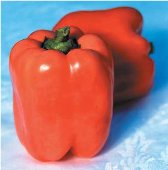 Valencia Sweet Peppers SP80-10_Base