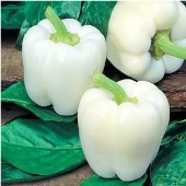 White Cloud Sweet Peppers Sp153 20