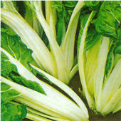 Silver Ice Swiss Chard SW15-50_Base