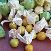 Pineapple Tomatillo TL2-20_Base