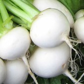 White Egg Turnips TP5-100_Base