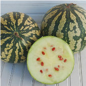 Citron Watermelons WM16-20_Base