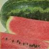 Cobb Gem Watermelons WM22-20_Base