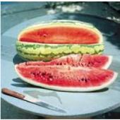 Garrisonian Watermelons WM56-20