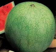 Greybelle Watermelons WM27-20_Base