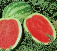 Sweet Trip Watermelons (Seedless) WM24-5_Base