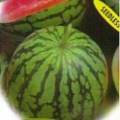Ultra Cool Seedless Watermelons WM24-10_Base