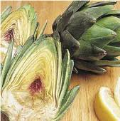 Green Globe Improved Artichokes AR1-20