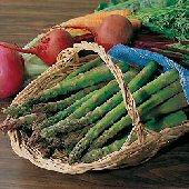 Jersey Knight Asparagus Seeds