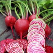 Chioggia Beets BT1-50_Base