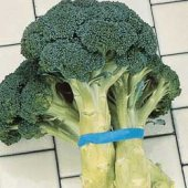 Green Goliath Broccoli BR15-50_Base