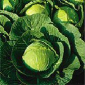 Multikeeper Cabbage CB38-50
