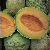 Amish Melons CA48-20_Base
