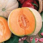Honey Rock Melons CA6-20_Base