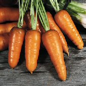 Chantenay Royal Carrots CT27-100_Base