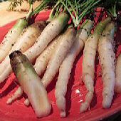 Lunar White Carrots CT33-100