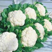 Snow Crown Cauliflower CF6-50