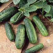 Patio Pickles Cucumbers CU18-10