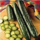 Sweeter Yet Cucumbers CU2-20