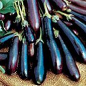 Long Purple Eggplants EG10-20